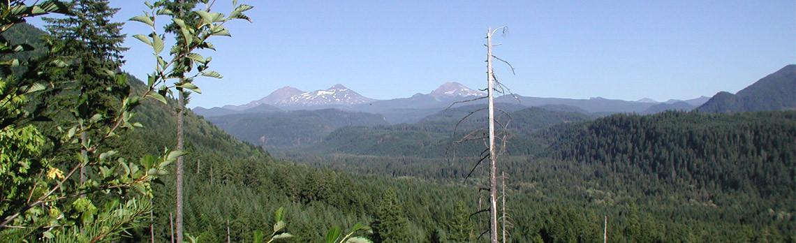 slide-forestry