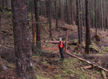 tongassforest
